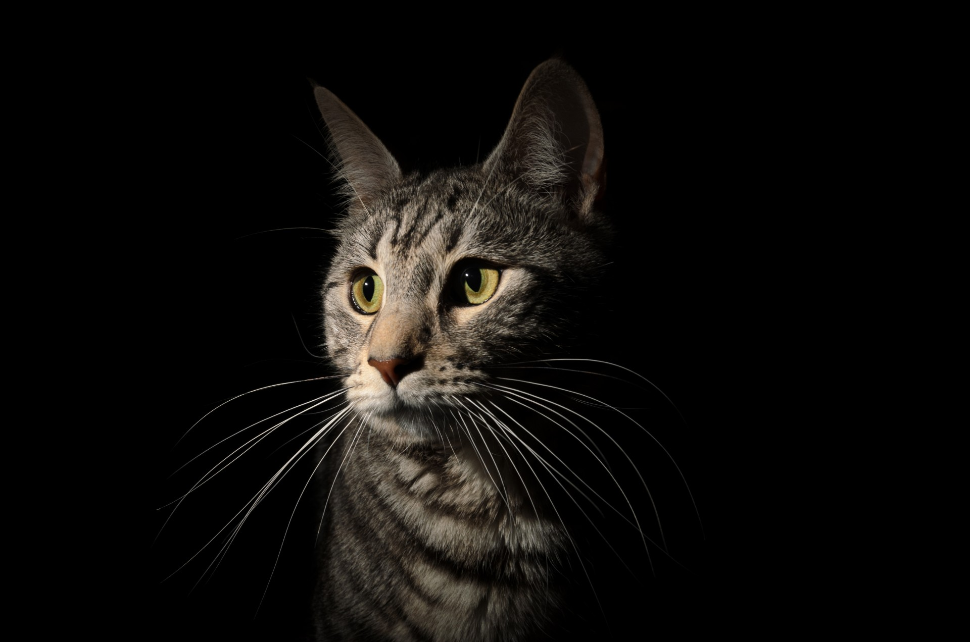Aceite de sardina para gatos