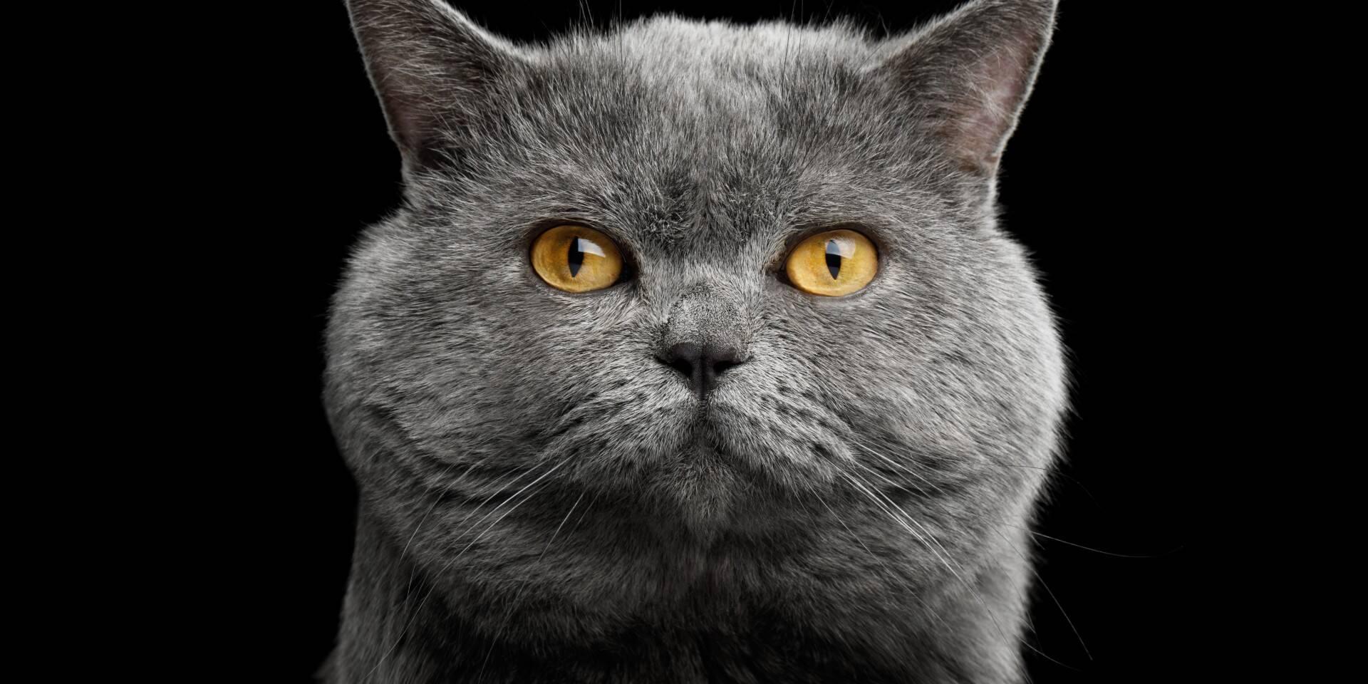 Aceite de salmón para gatos senior